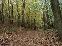 Woodland walk