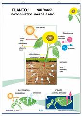 Fiziologio de la planto