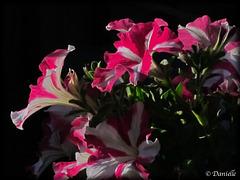 Des fleurs pour vous….