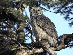 Got my owl 'fix' yesterday