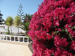 HFF from Tenerife