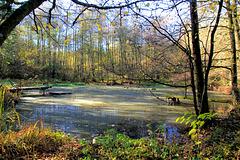 Schlummernder Waldsee