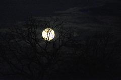 J'ai demandé à la lune ....