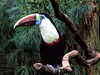 You Toucan have a great and happy New Year
