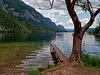 Am Bohinjsko jezero  (Wocheiner See) (PiP)