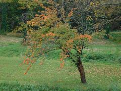Petit arbre...