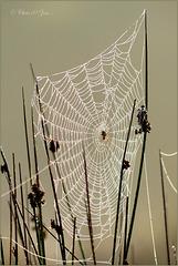 Web met spin...