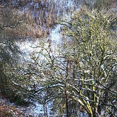 IMG 8486 winter