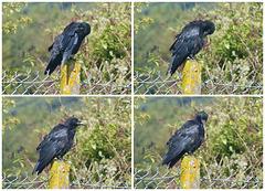 Crow Running Maintenance (2) - 14 September 2017
