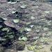 Croqueurs de petites algues