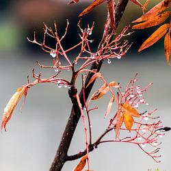 Regenperlen im November