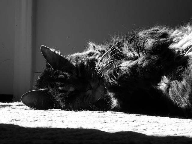 Catlight III