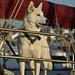 Sailboat Husky at Sunset - Nikon D750 - AFS Nikkor 28-300mm 1:3.5-5.6G VR