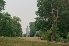 Landschaft mit Totholz