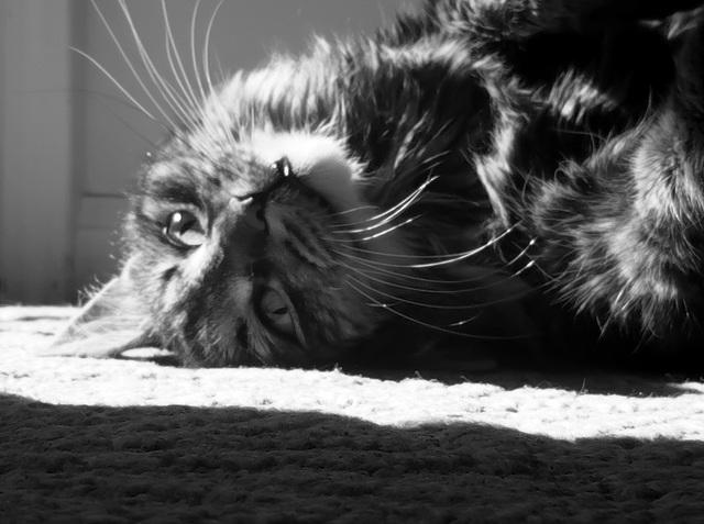 Catlight II