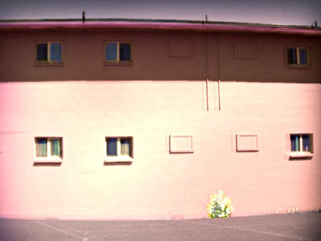 Flaming bush at the pink motel