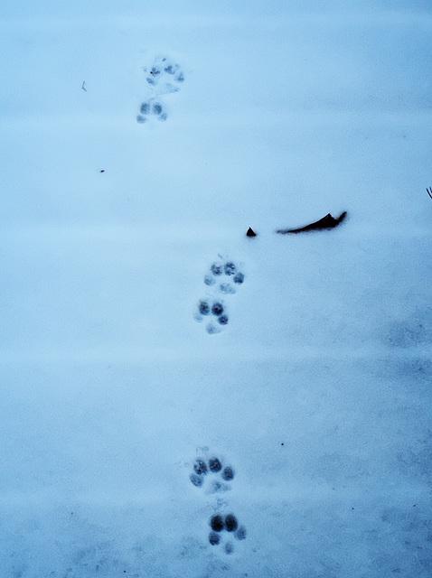 Footprints Too (blue)