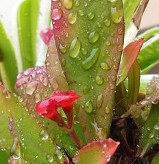 Jour de pluie / Rainy day