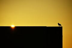 Sonne trifft Möwe