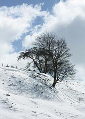IMG 7710 winter