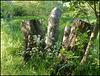 spring stumps