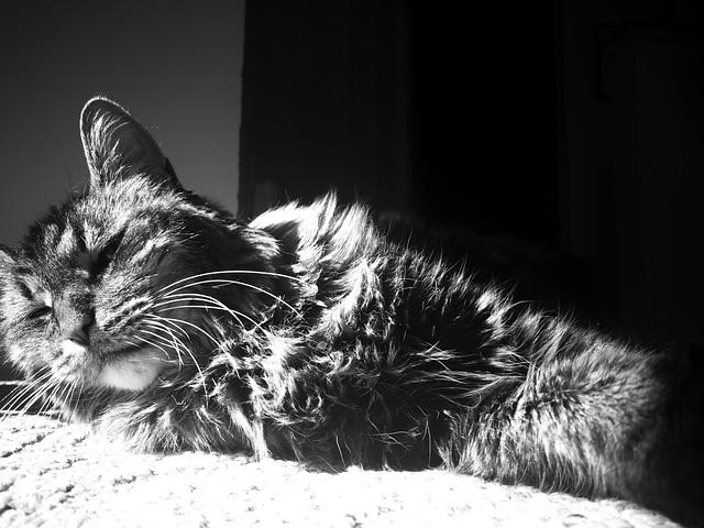 Catlight I