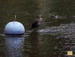 Bird and Buoy
