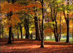 """""""Remembrance (Autumn Song)"""""""