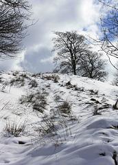 IMG 7657 winter