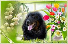 Sirius vous souhaite un bon 1er Mai