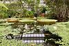 Hortus Botanicus 2020 – Victoria amazonica