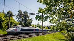 090507 TGV Malley B
