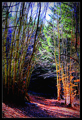 The Forest... coeur sombre