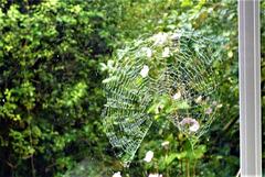 Cobweb outside my bedroom