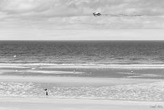 Cabourg en cerf-volant
