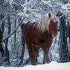 """""""Le petit cheval dans le mauvais temps..."""""""