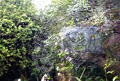 Drizzle on the cobweb