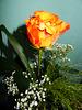 Ein Rosengruß