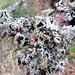 Lichen on Tree Trunk