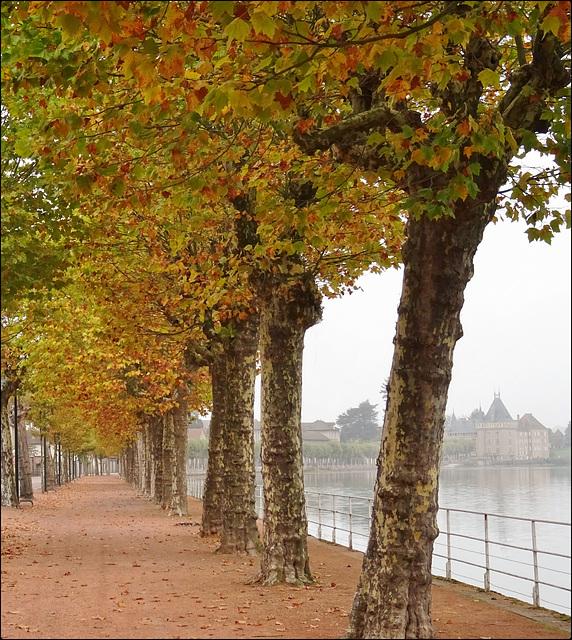 L'automne arlequin [ON EXPLORE]