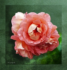 Rosa sobre verde