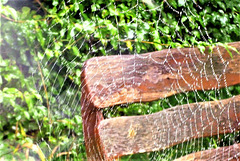 The drizzle droplets on the web