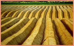 Corduroy field