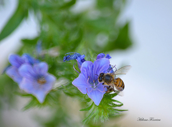 ❀❀ Small purple flower and a bee. ❀´¨