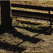 Bench with Shadows