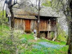 Spring in the yard of an abandoned house