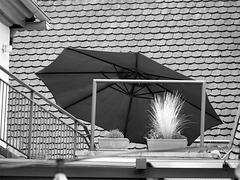 Roof Garden Fence Dream
