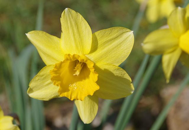 Demain c'est le printemps !