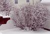 Décor d'hiver….