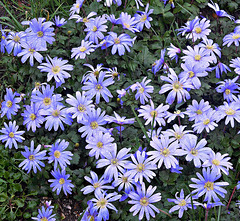 Blue flowers under a grey sky